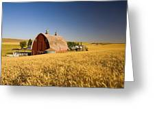 Sunset Barn And Wheat Field Steptoe Greeting Card