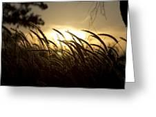 Sunset Behind Tall Grass Greeting Card