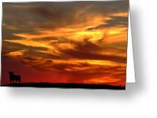 Sunset Bull  Greeting Card