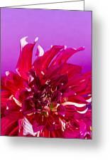 Sunset Dahlia 2 Greeting Card