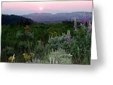 Sunset Flowers Greeting Card