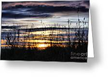 Sunset Grasses Greeting Card by Sandra Cockayne