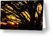 Sunset In The Trees Greeting Card