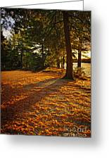 Sunset In Woods At Lake Shore Greeting Card