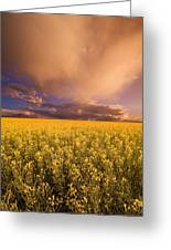 Sunset On A Canola Field Greeting Card