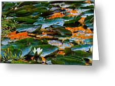 Sunset On A Lily Pond Greeting Card