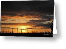 Sunset On The Vineyards Greeting Card by Nancy Chambers