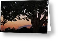 Sunset Over A Witness Tree Greeting Card