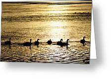 Sunset Over Canada Geese Greeting Card by Joseph Rossi