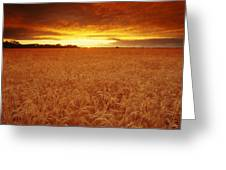 Sunset Over Wheat Field Greeting Card