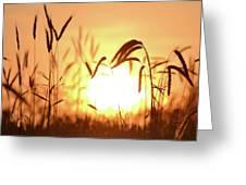 Sunset Rye IIi Greeting Card