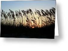 Sunset Sea Oats Greeting Card
