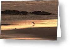 Sunset Shimmer Beach Greeting Card