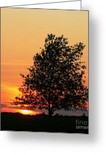 Square Photograph Of A Fiery Orange Sunset And Tree Silhouette Greeting Card
