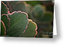 Sunset Succulents Greeting Card