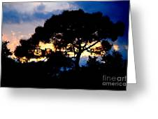 Sunset With Pine Tree Greeting Card