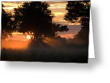 Sunset With Silhouetted Trees Greeting Card