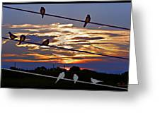 Sunsets And Birds Greeting Card