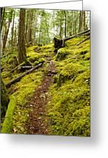Sunshine Coast Trail Greeting Card