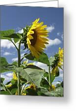 Sunshine Flowers Greeting Card