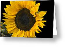 Sunshine In The Night Greeting Card