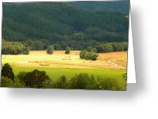 Sunshine In The Valley Greeting Card