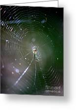 Sunshine On Swamp Spider Greeting Card