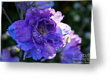 Sunshine Post Showers Greeting Card