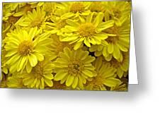 Sunshine Yellow Chrysanthemums Greeting Card