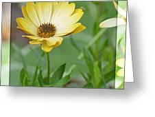 Sunshiny Day Greeting Card