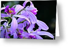Super Orchid Greeting Card