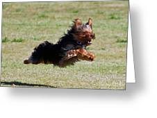 Super Yorkie Greeting Card