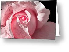 Supple Pink Rose Dipped In Dew Greeting Card
