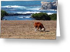 Surf And Turf  Greeting Card by Jeff Lowe