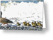 Surf Ducks Greeting Card