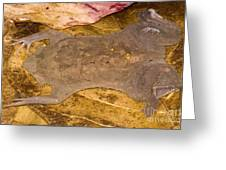 Surinam Toad Greeting Card