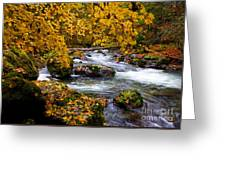 Surrounded By Autumn Greeting Card