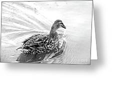 Susie Duck Greeting Card