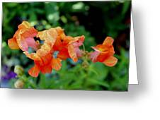 Suspended Blossoms Greeting Card