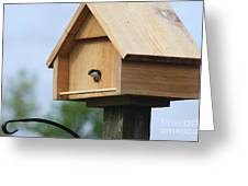 Swallow Box Home Greeting Card