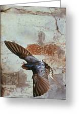 Swallow In Flight Greeting Card