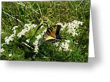 Swallow Tail  Greeting Card