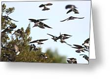 Swallows - All In The Family Greeting Card