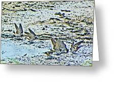 Swallows At The River Greeting Card