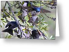 Swallows In Pooler Greeting Card