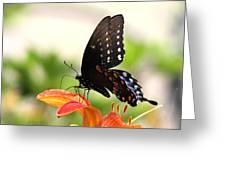 Swallowtail - Lite And Lively Greeting Card