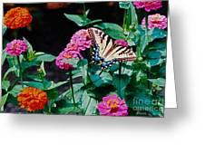 Swallowtail Among The Zinnias Greeting Card