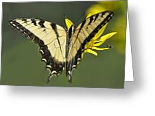 Swallowtail And Friend Greeting Card