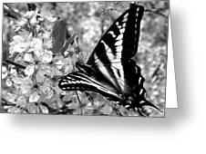 Swallowtail Butterfly And Plum Blossoms Greeting Card