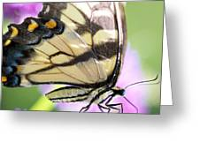 Swallowtail Butterfly Greeting Card by Kim Fearheiley